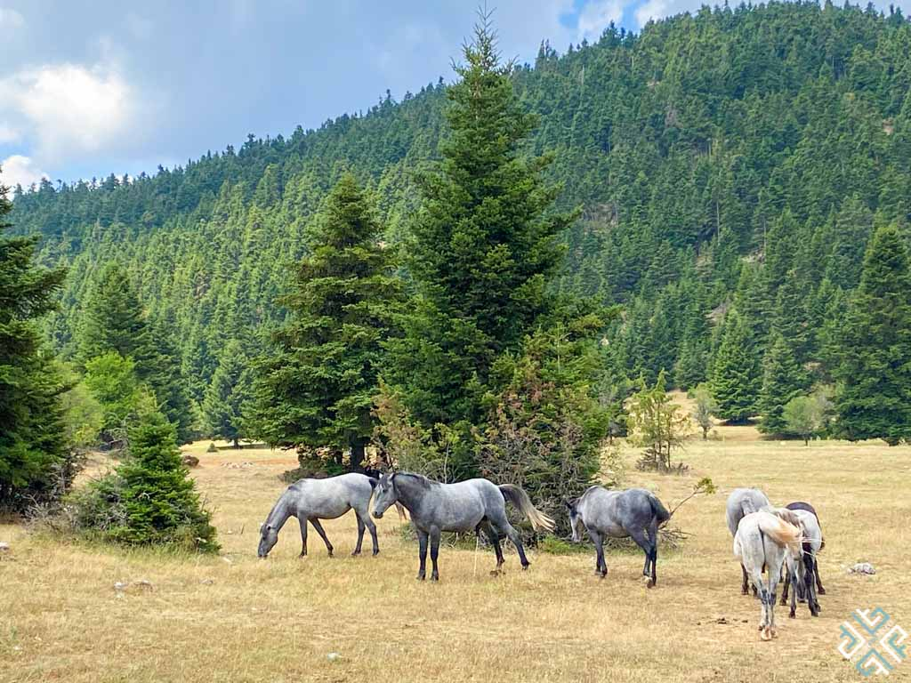 7 Ways to Enjoy Nature in Ypati, Central Greece